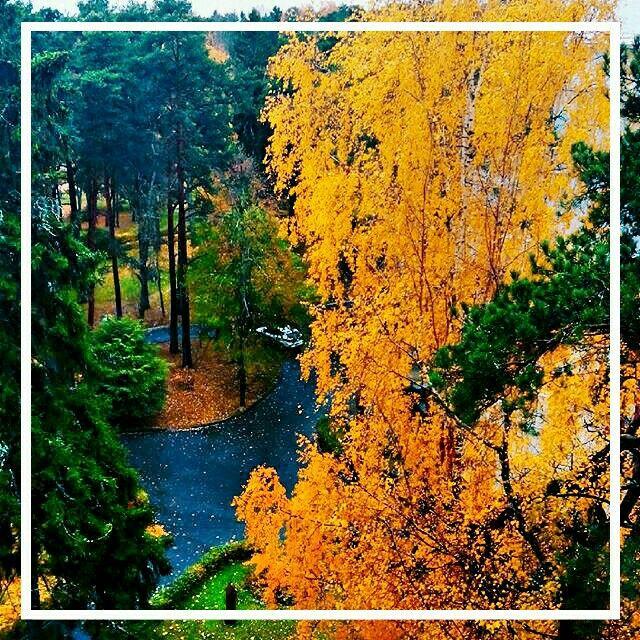 Autumn ⛅☔