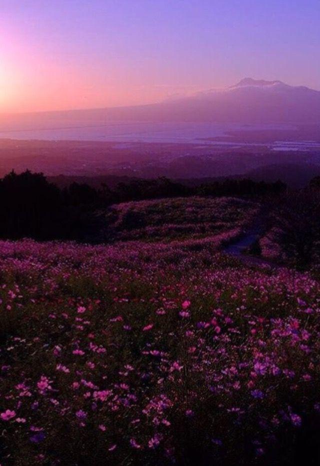 pinterest: @xsedona | | Sky aesthetic, Nature aesthetic ...