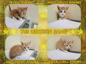 The Western Gang A1114382 A1114383 A1114384 A1114385 Cat Shelter Pet Adoption Cute Animals