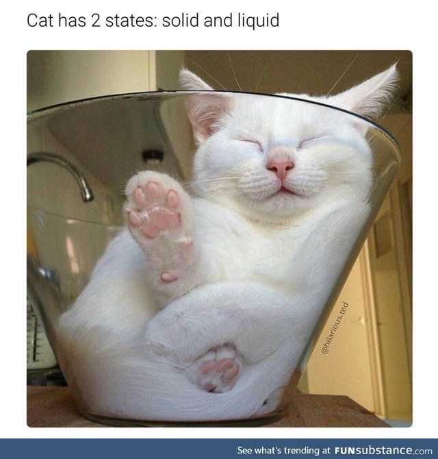 Cats Are Just Blobs With Fur Cat Sleeping Funny Animal Pictures