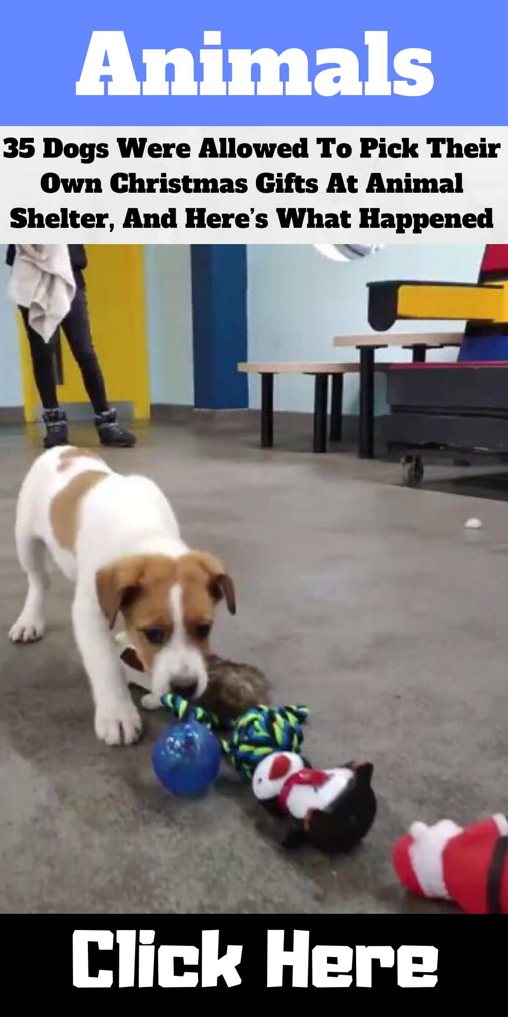 35 Dogs Were Allowed To Pick Their Own Christmas Gifts At Animal Shelter And Here S What Happened In 2020 Animal Shelter Excited Dog Cute Cats And Dogs