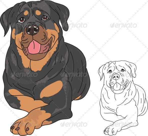 Rottweiler Dog Rottweiler Dog Rottweiler Tattoo Rottweiler