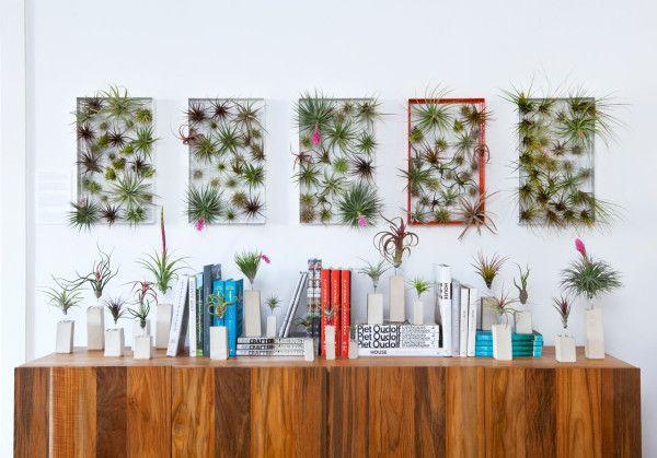 vertikaler garten airplantframe tillandsien innenraum wand, Gartenarbeit ideen
