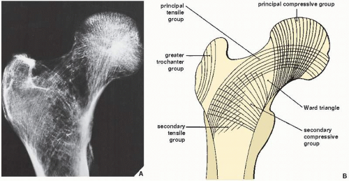 28+ Difference between osteoporosis and rickets viral