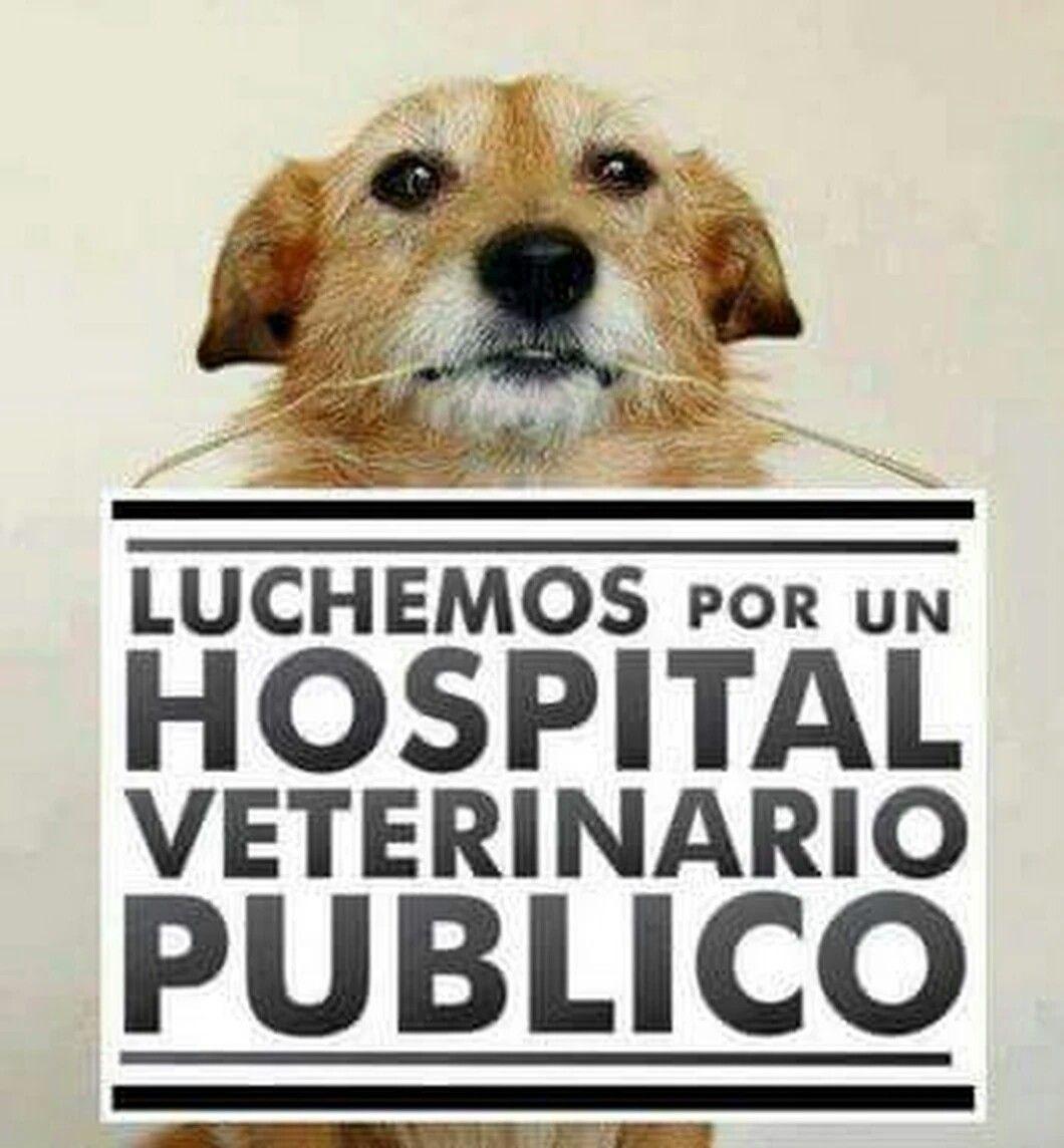 Luchemos Por Los Animales Veterinaria Cuidar Animales Amantes De Perros