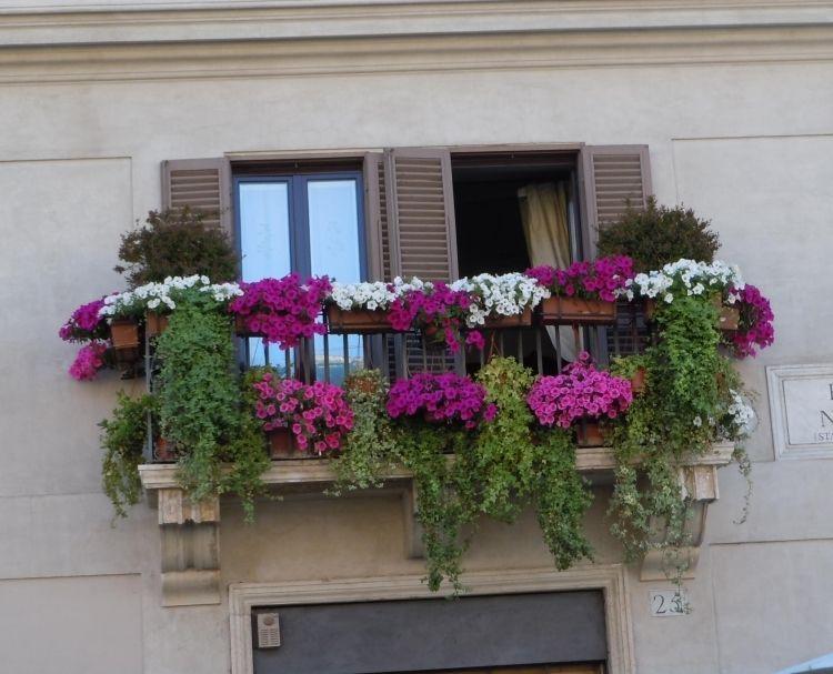 Balkon Pflanzen Und Blumen Blutenpracht Und Sichtschutz Balkon