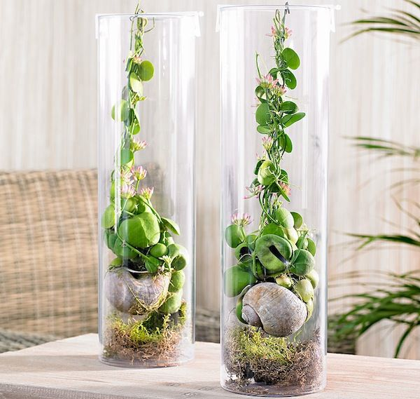 Piccole piante grasse da appartamento cerca con google for Piccole piantine
