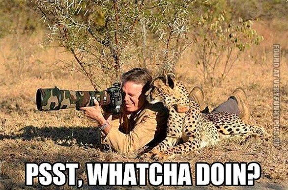 Funny Pictures People Animals Cheetah Surprises Photographer - 49 hilarious pictures people animals