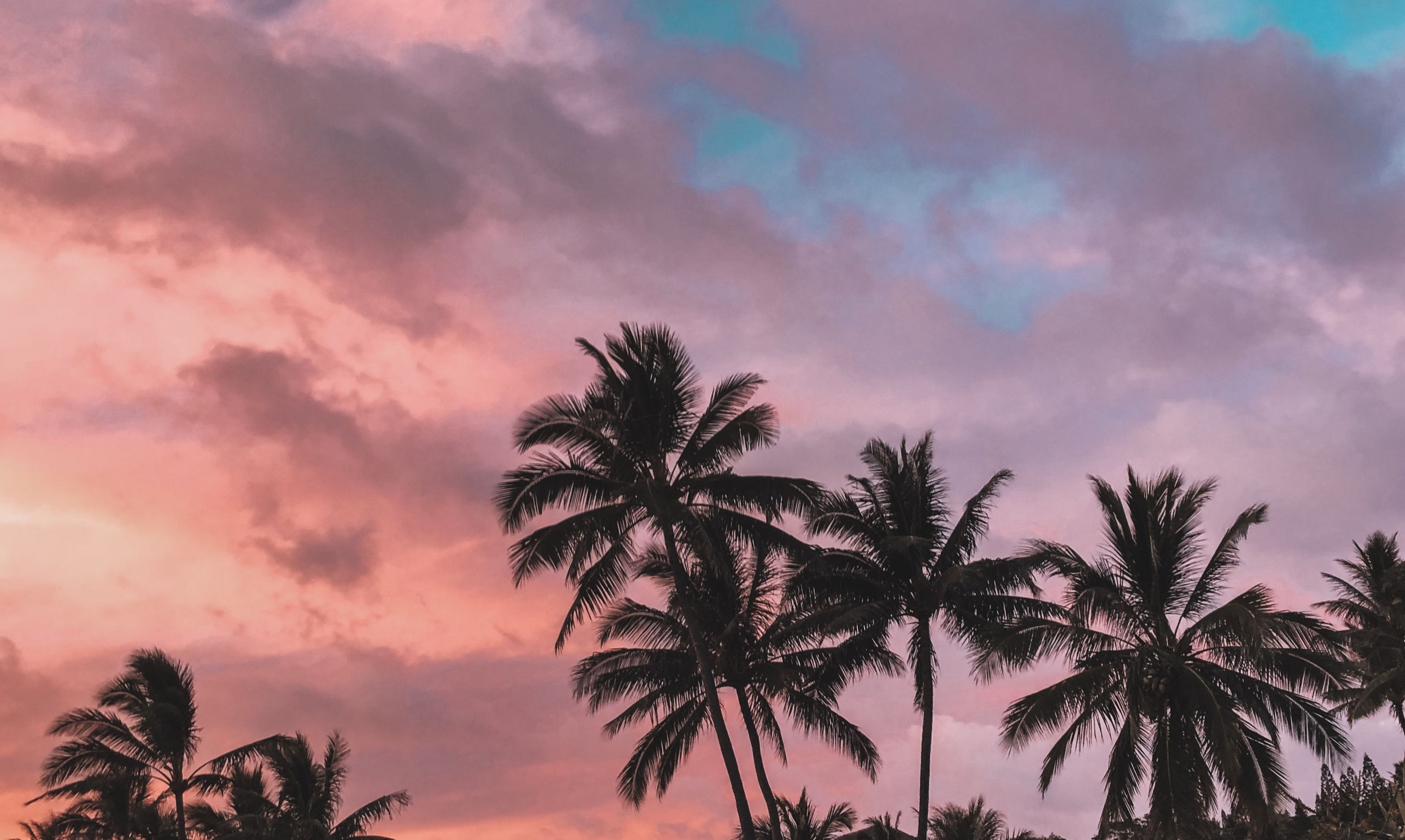 Beautiful Tropical Beach With Palm Tree On Sunset Twilight Sky Clouds Abstract Background Copy Space O Nature Travel Adventure Tropical Beach Beach Palm Trees
