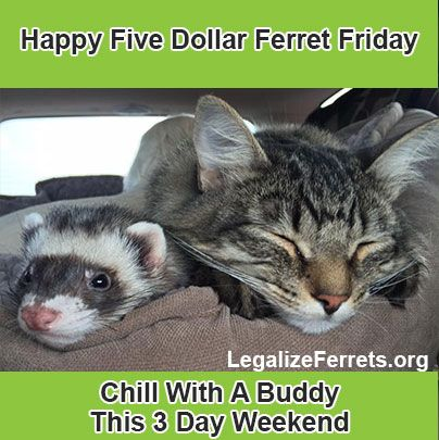 Super Ferret Five Dollar Friday Happy Three Day Weekend With Images Ferret Cute Animals Happy