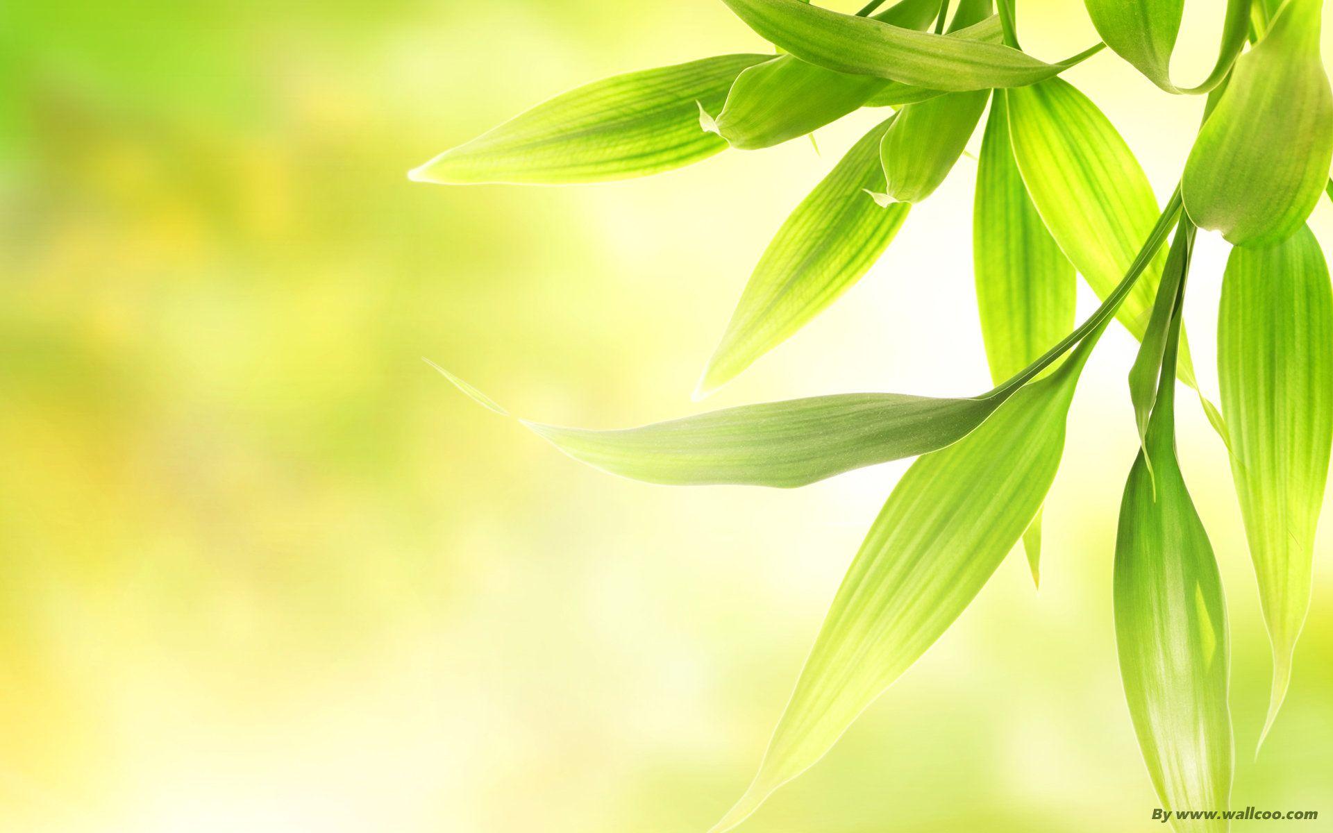 MySpringFashionPalette catalogs Green funeral, Natural