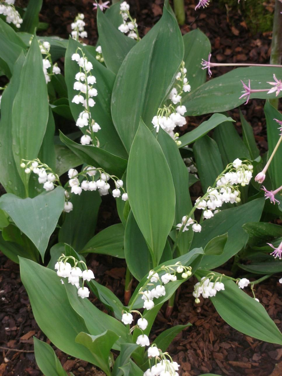 Perennial plants for winter spring perennial flowers pinterest the bold colors and leaves on these perennials will take you from the chill of winter to the sunshine of spring mightylinksfo