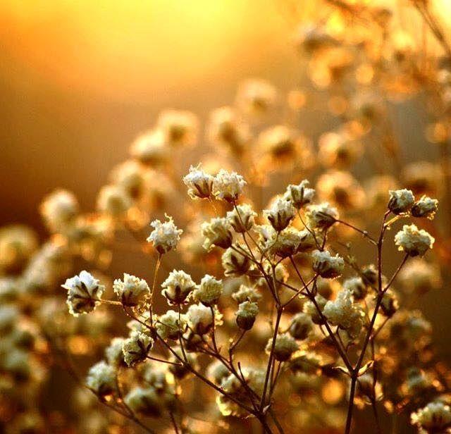 Um lugar pra chamar de Meu...: Sinta a vida e a deixe florir outra vez.