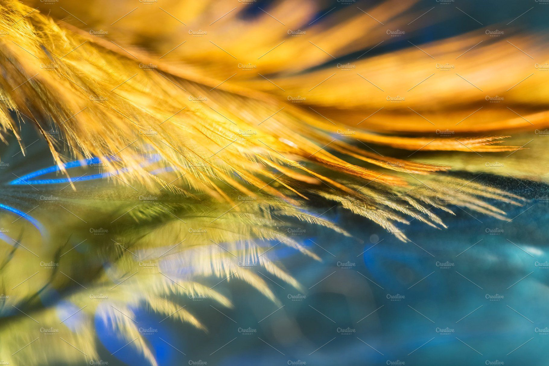70 Stunning Abstract Photographs: Beautiful Abstract Background, Feather Of Golden Color