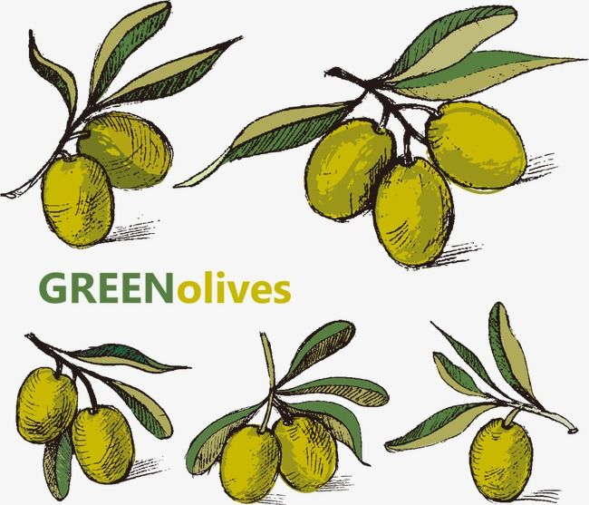 Vector Painted Olives Zeytin Desenler