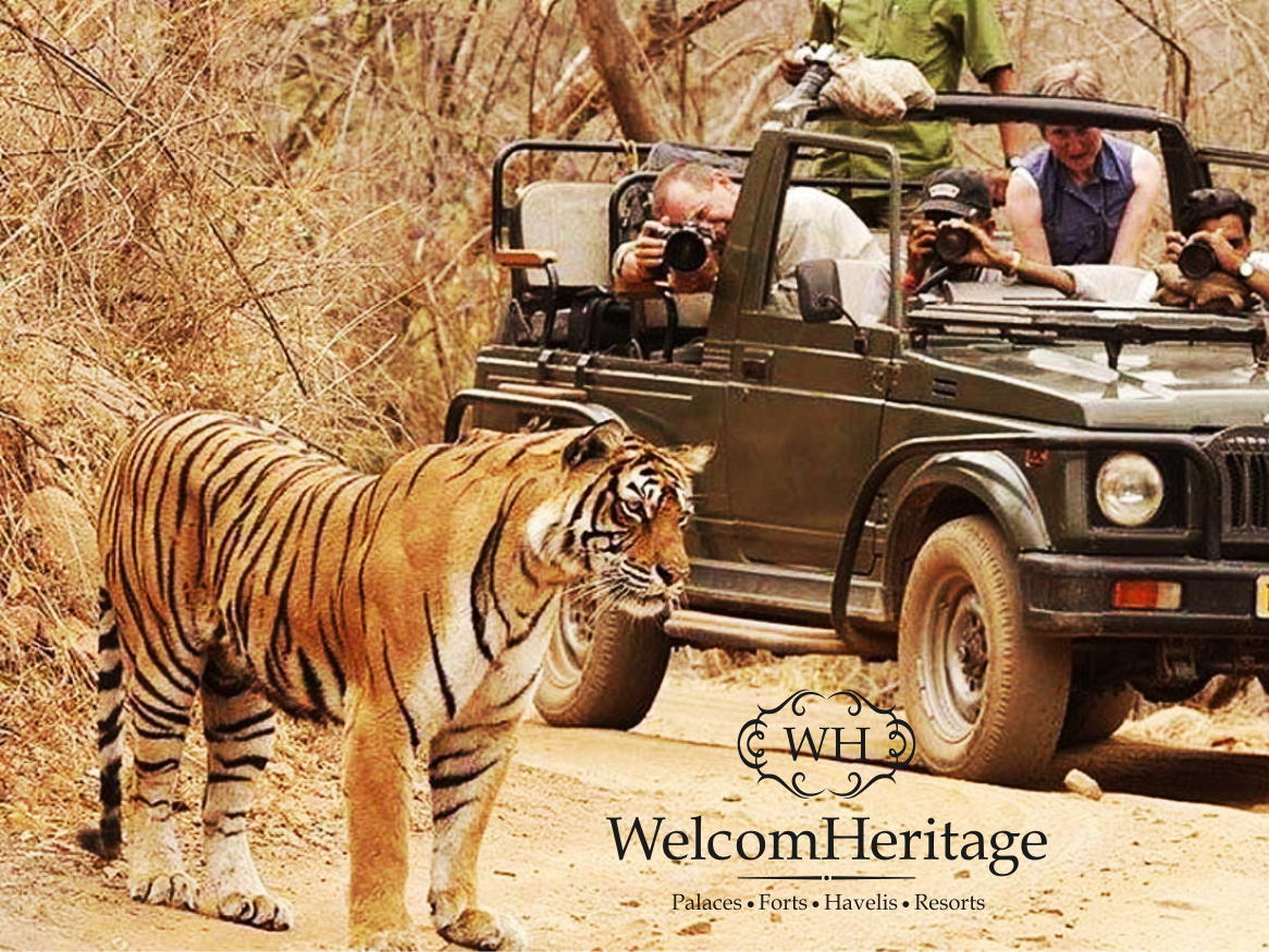 Catch the eye of the Tiger while on a Game Drive in
