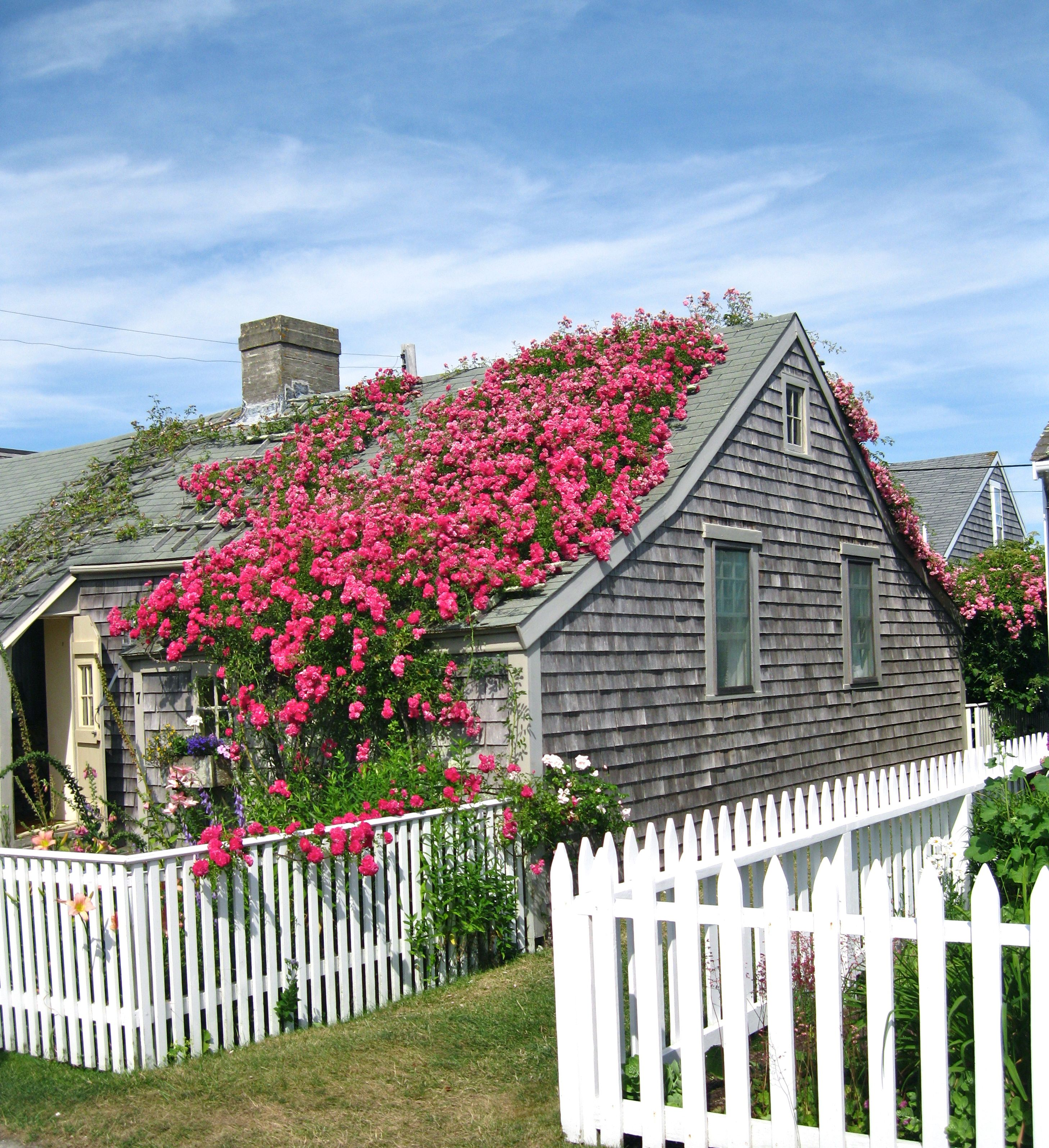 heritage cottage rose pin sea the of captain cottages pinterest island captains architectural img roses covered houses nantucket and