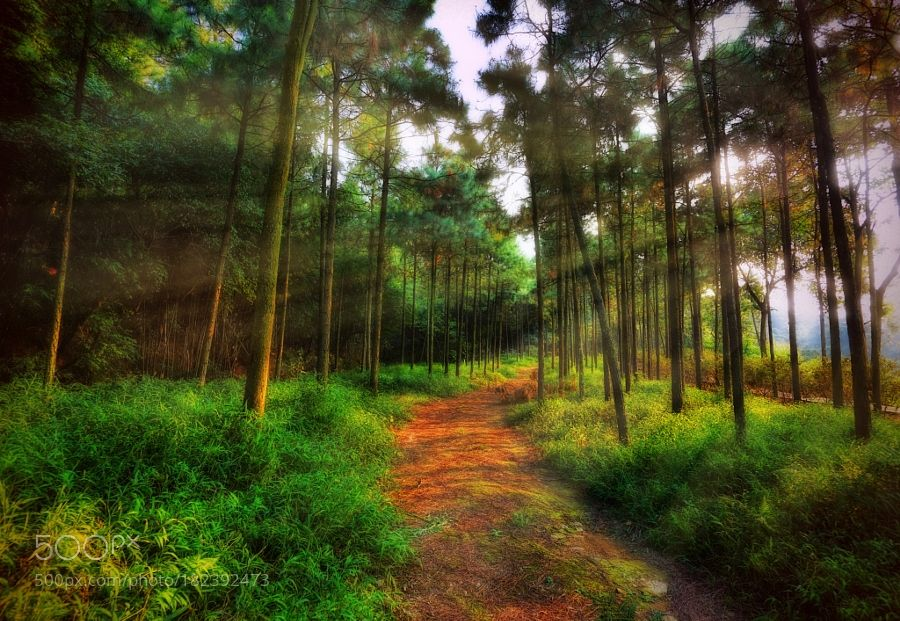 mountain forest by LiudmilaD