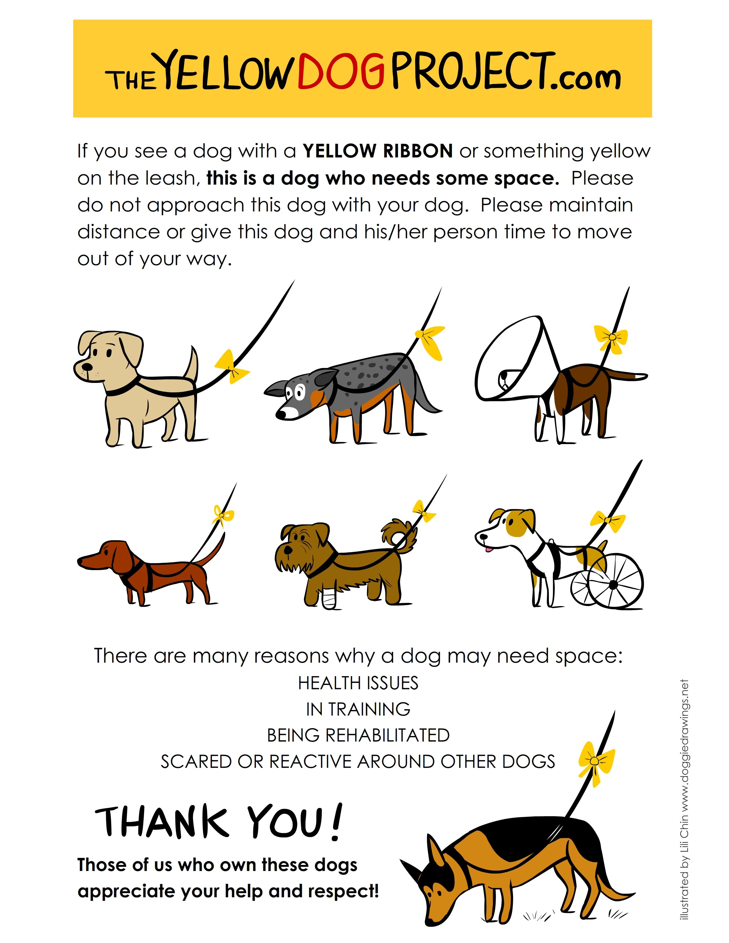 What Does That Yellow Ribbon Mean The Yellow Dog Project Dog