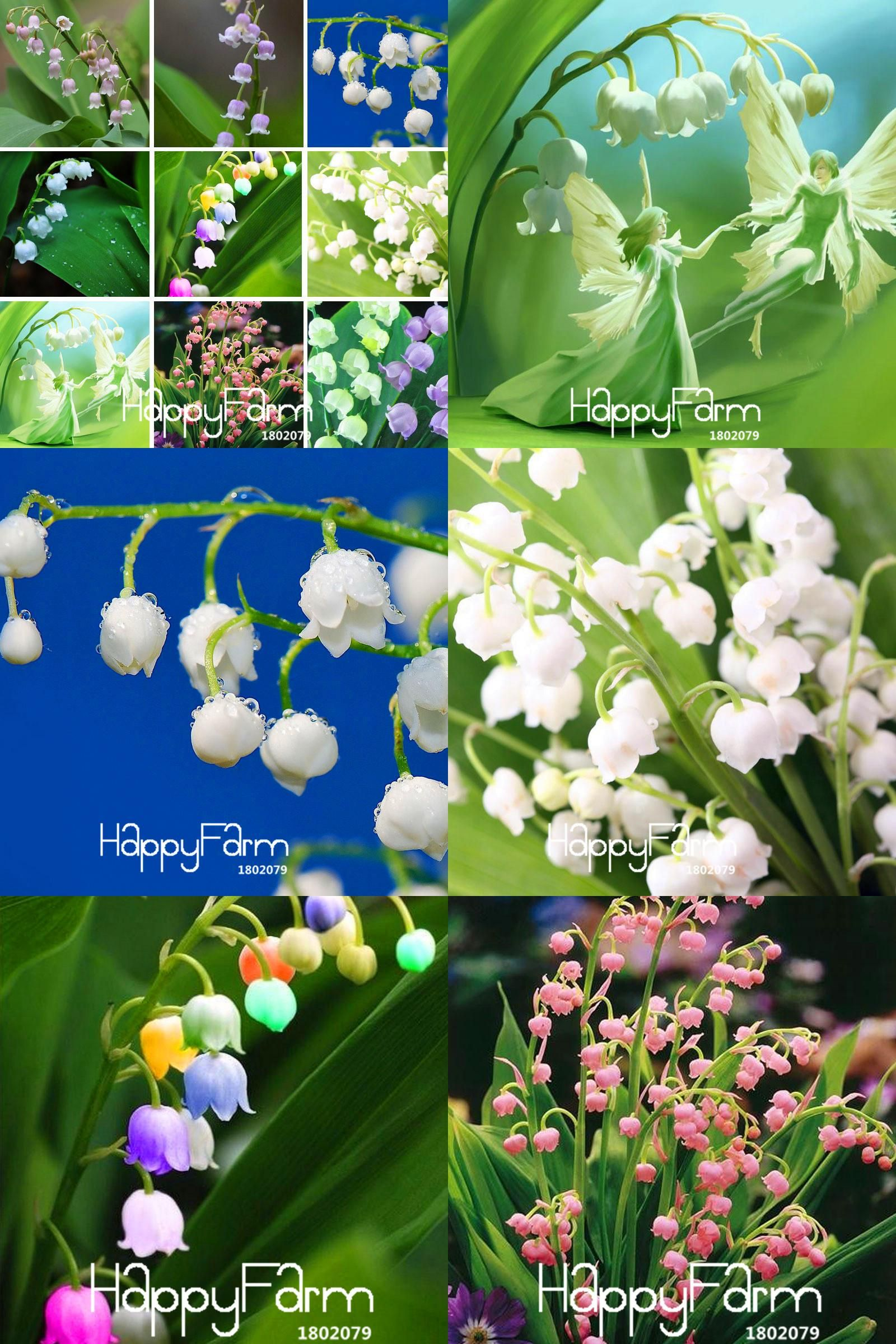 Visit To Buy Sale 6 Colors Mixed Bell Orchid Seeds Campanula Flowers Potted Flower Plants Convallaria Seed 10 Orchid Seeds Campanula Flowers Planting Flowers