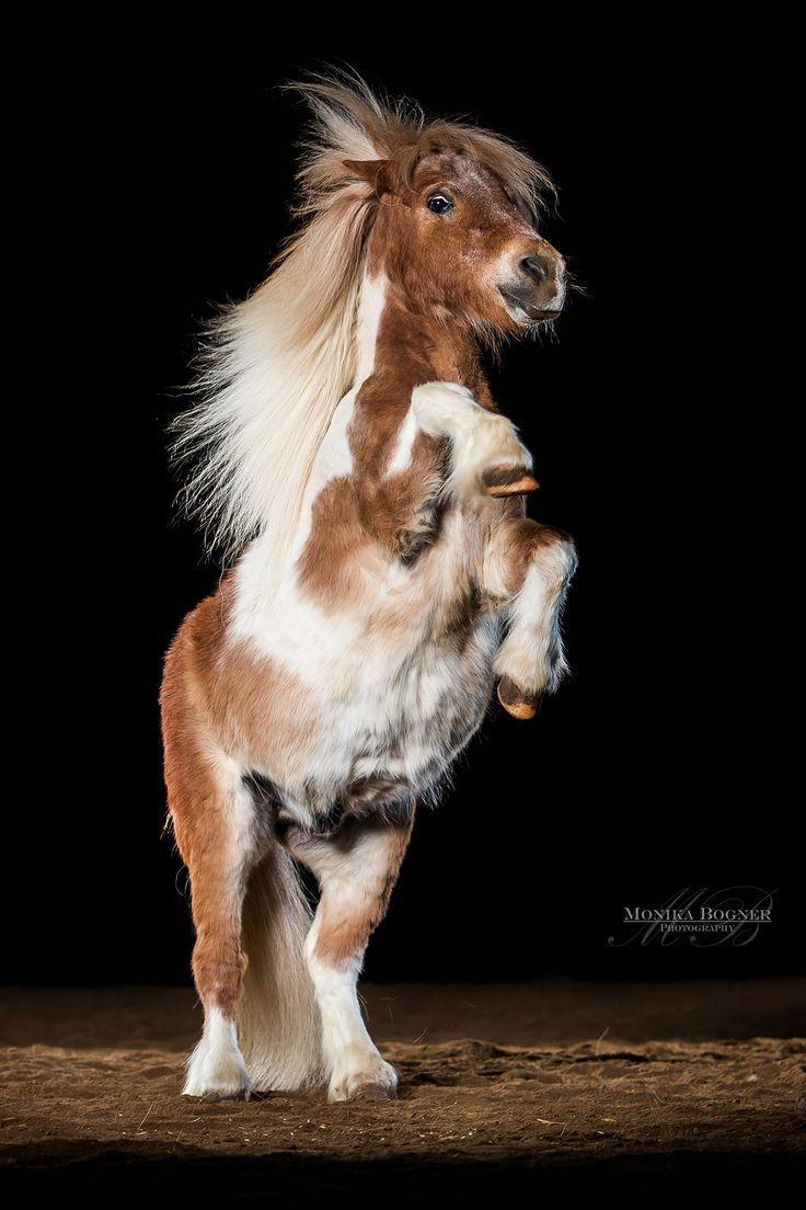 Photo of Caballos en el estudio – monika bogner photography – fotografía de caballos y fotografía de perros …
