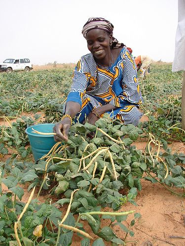 3/17 #5b: The women of Mozambique are responsible for domestic tasks. In towns and cities they work at their homes. In rural areas, they work with agriculture. (http://www.everyculture.com/Ma-Ni/Mozambique.html)
