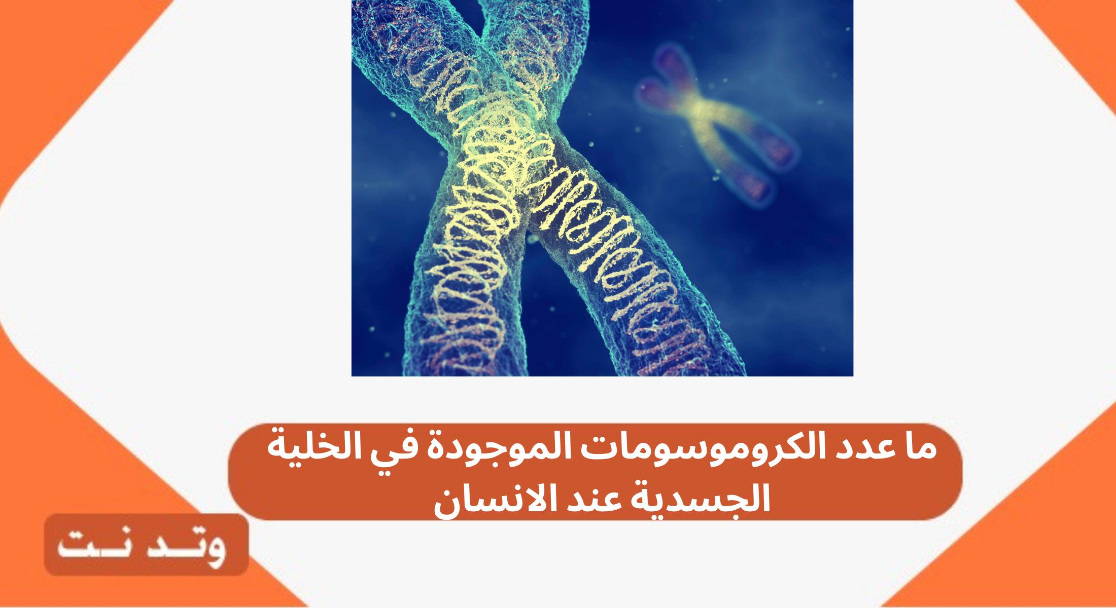 ما عدد الكروموسومات الموجودة في الخلية الجسدية عند الانسان Pandora Screenshot Screenshots