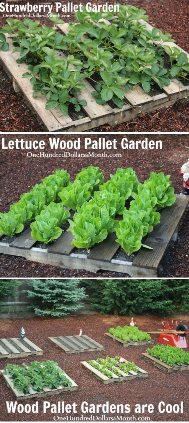 Wood Pallet Garden Pictures Lettuce Strawberries Celery And Lettuce One Hundred Dollars A Month Herb Garden Pallet Pallet Garden Pallets Garden