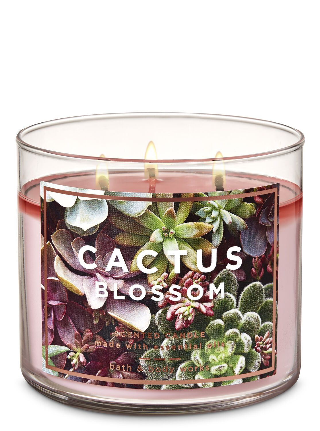 Cactus Blossom 3 Wick Candle By Bath Body Works Bath And Body Works Scented Candles Bath Body Works Candles