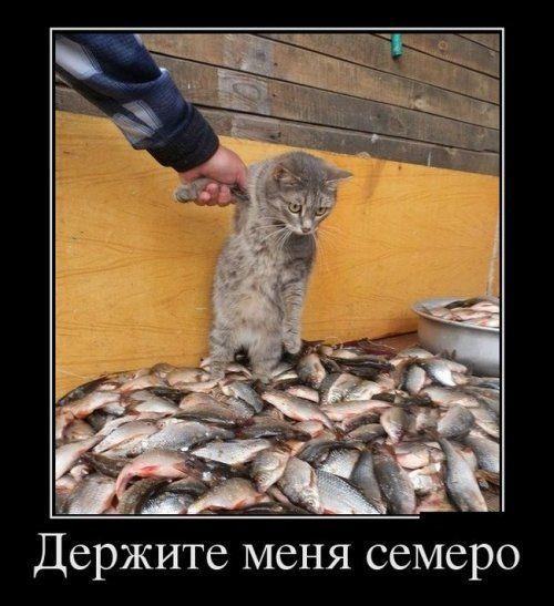 Демотиваторы ржака (24 шт) Картинки с текстом #демотиватор ...