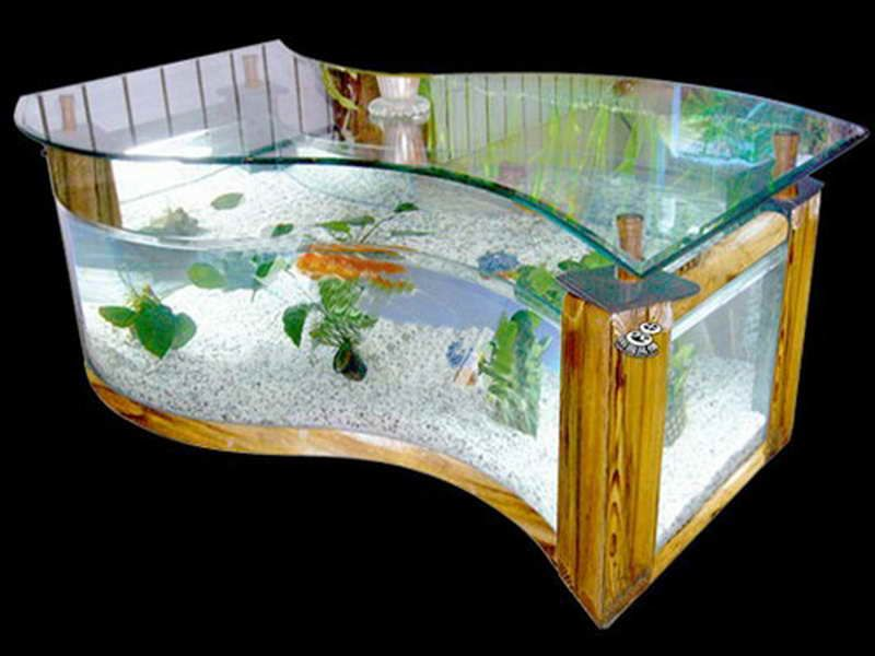Fish Tanks The Amusing Pics Above Is Section Of Perfect Fish - Acrylic aquariumfish tank clear round coffee table with acrylic
