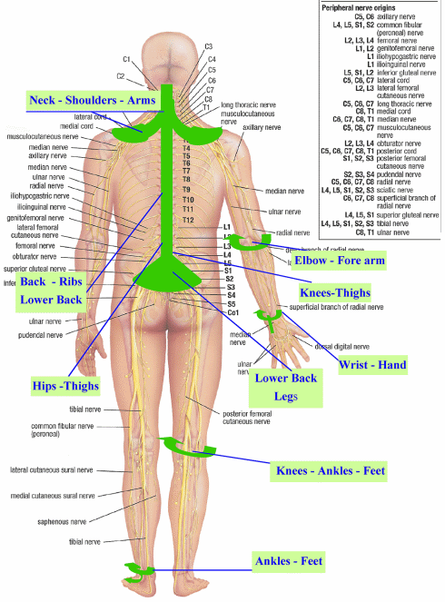 spinal nerve endings diagram - Bing Images | Neck and Shoulder Pain ...