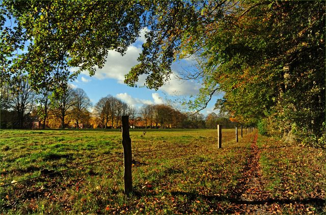 Nature in Uithuizen, Netherlands (other autumn pict menkemaborg trees) - a photo by aiso