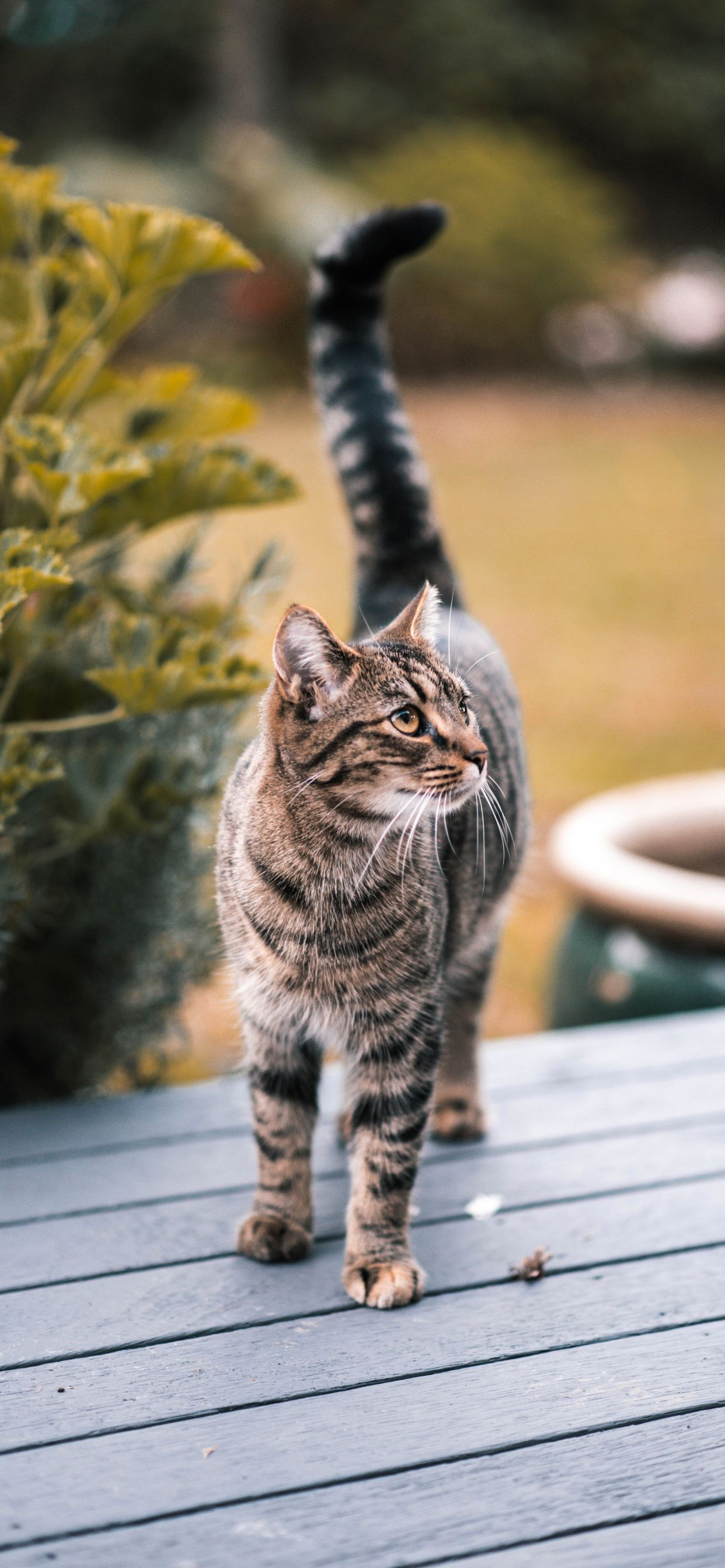 10 Cute Cat Wallpapers For Iphone Xr Iphone Xs Iphone Xs Max