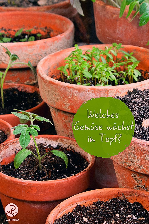 Photo of Gemüse im Topf anbauen: Die 10 besten Sorten für die Topfkultur – Plantura
