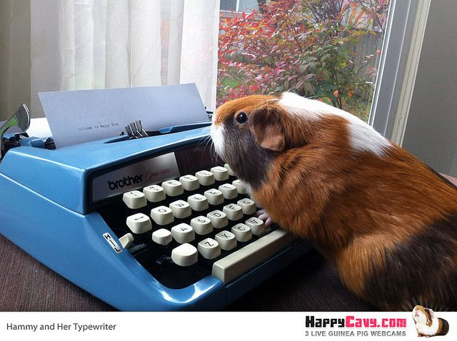 Pin On Guinea Pig Rescues