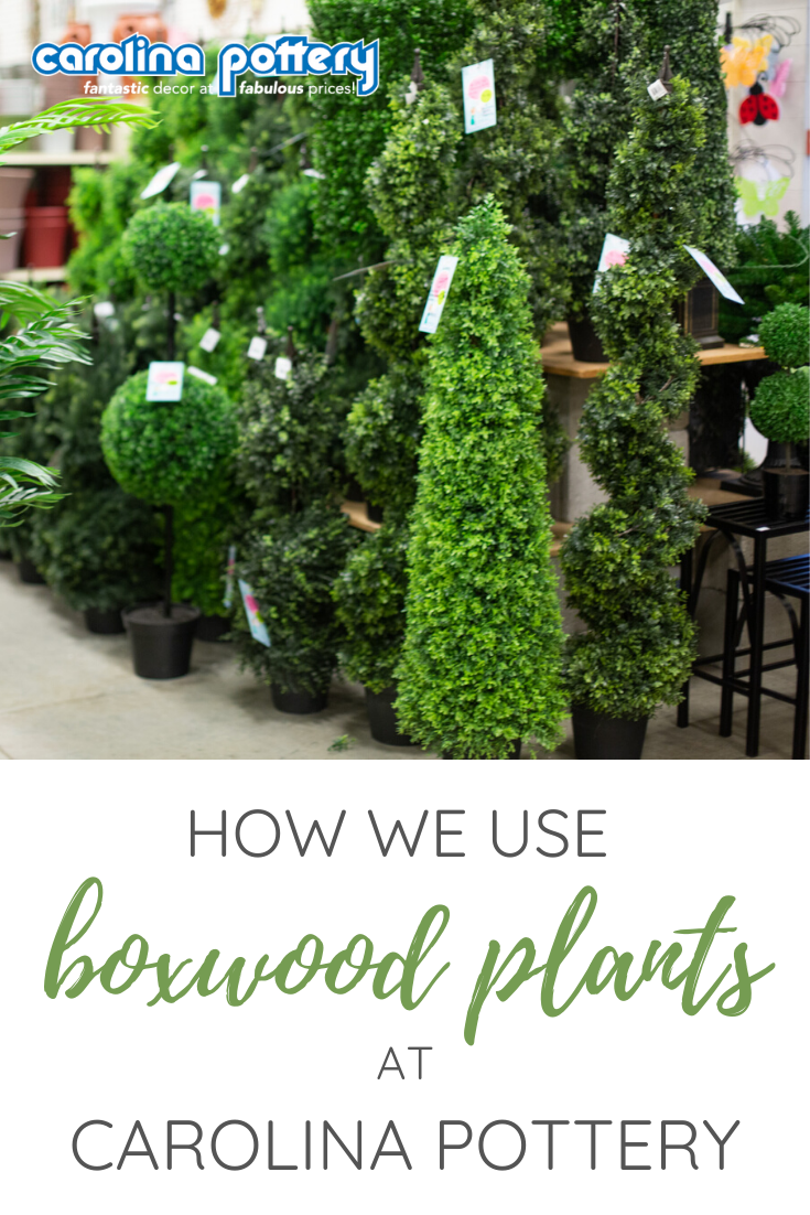 Carolina Pottery Blog What's Hot: Boxwood Greenery - How to decorate with Boxwood like a pro! . #carolinapottery #carolinapotteryblog #homedecorblog #diydecorblog #decoratingblog #blog #blogpost