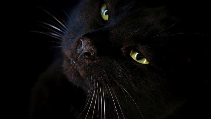 Download Black Cat Wallpaper 2954 For Desktop Background PC Mobile Laptop Widescreen