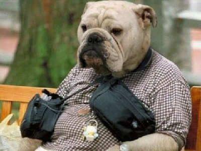 Bulldog Man With Images Bulldog Animals French Bulldog