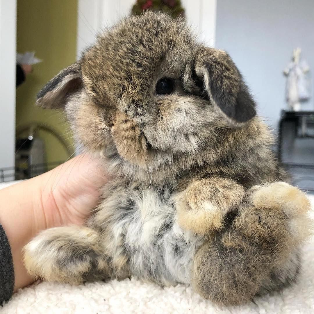 bunnymama Hashtag • Instagram Posts, Videos & Stories on