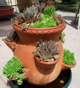 Succulents So Easy To Grow And Look Great In Bonsai Pots 400 x 300