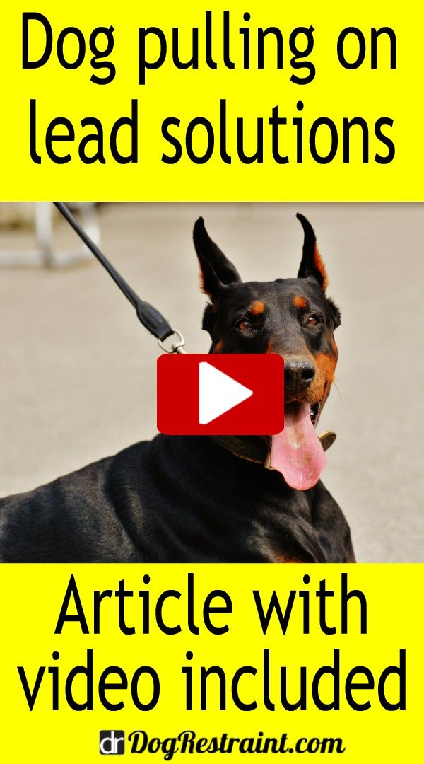 Dog Pulling On Lead Solutions Stop Dog From Pulling On Leash