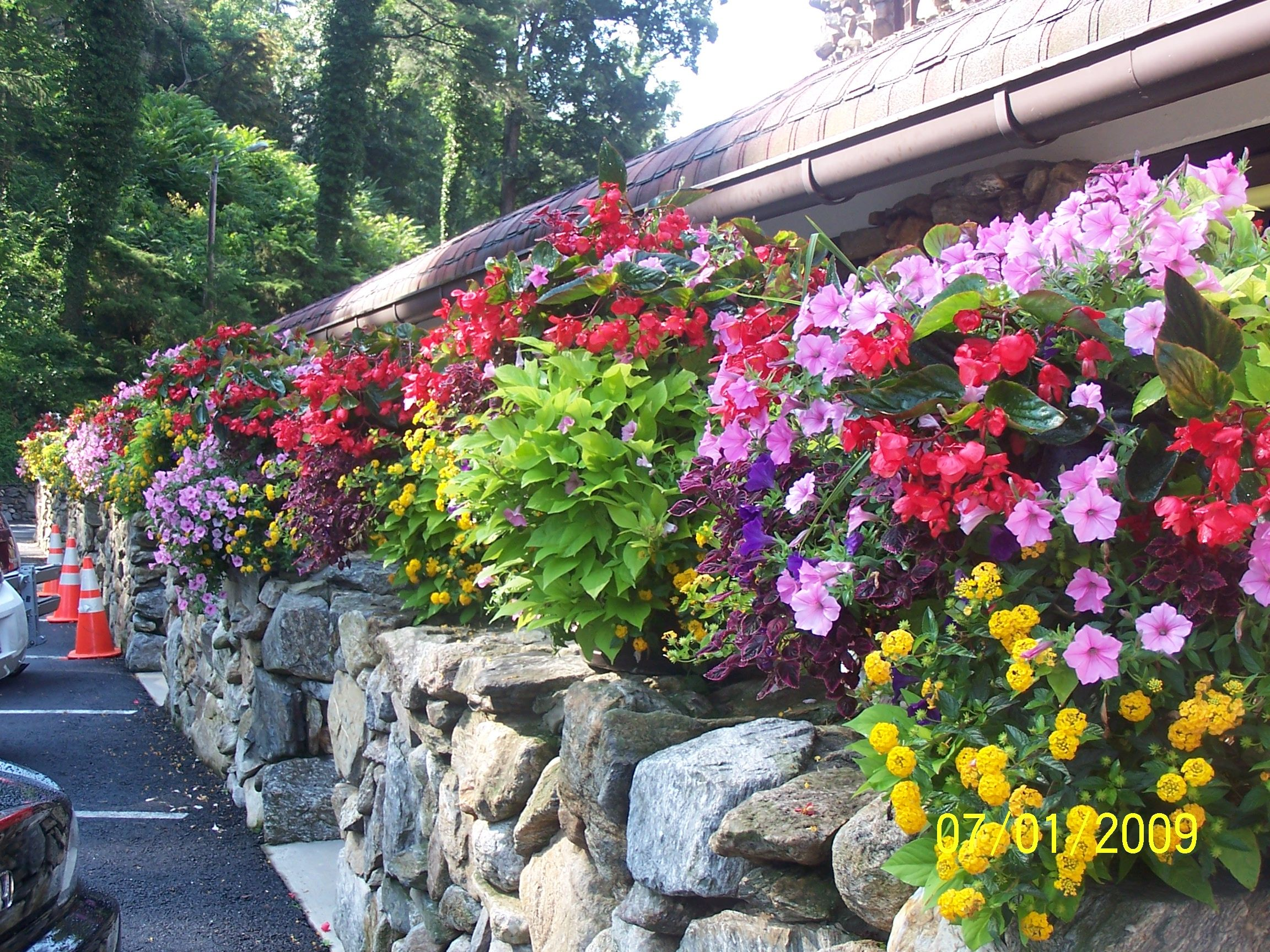 image result for flowers around pool | back yard ideas | pinterest