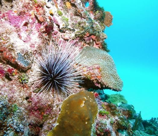 Morays besides Tonyhakim furthermore La ceiba also 273101164875958638 further 6 Hours In Cozumel Mexico. on marine life you can find when snorkeling in cozumel