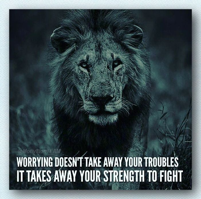 Strength Quote With Lion Wit Wisdom Quotes Pinterest Quotes