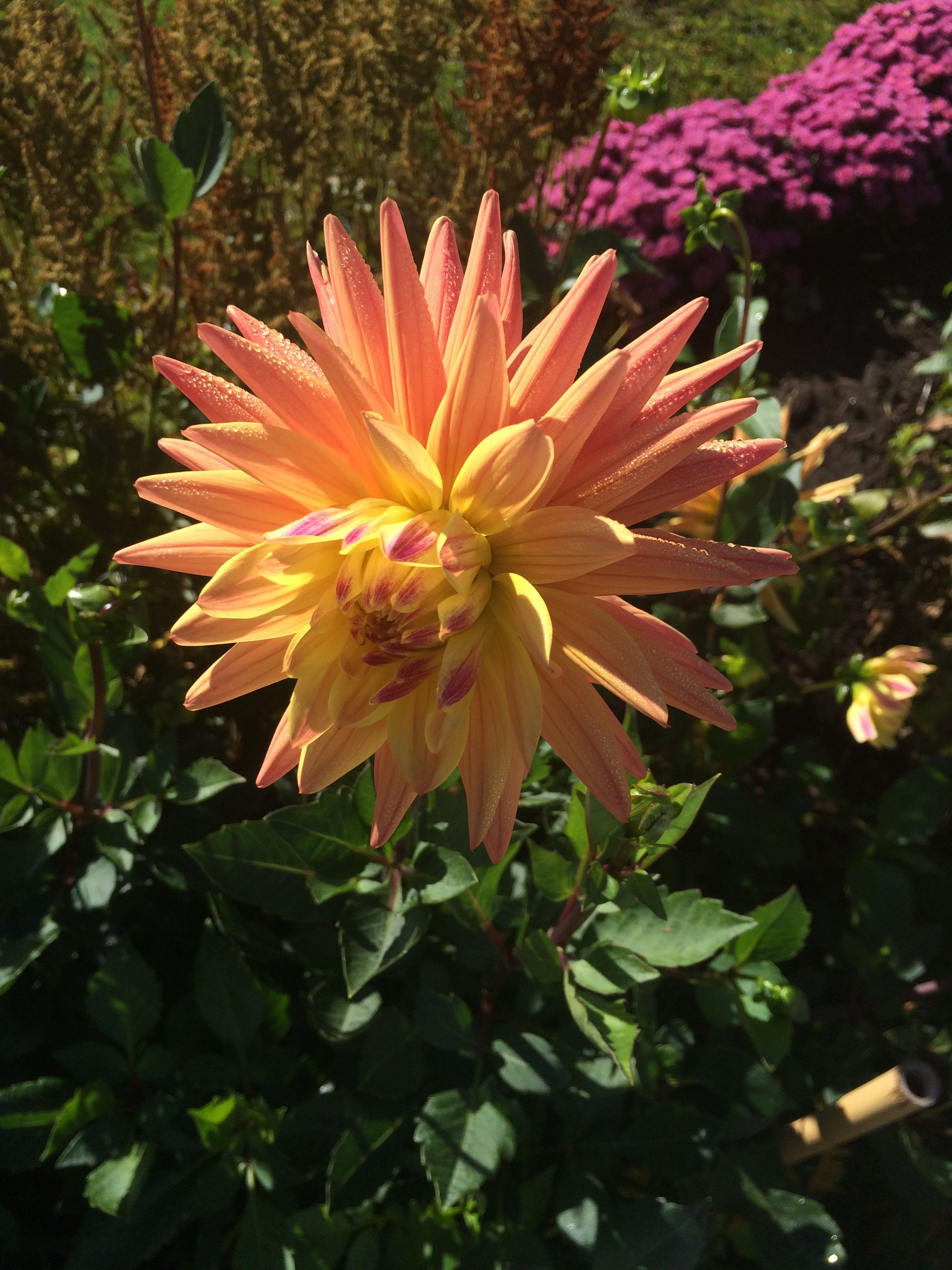 Fall in maine flower power plants flowers