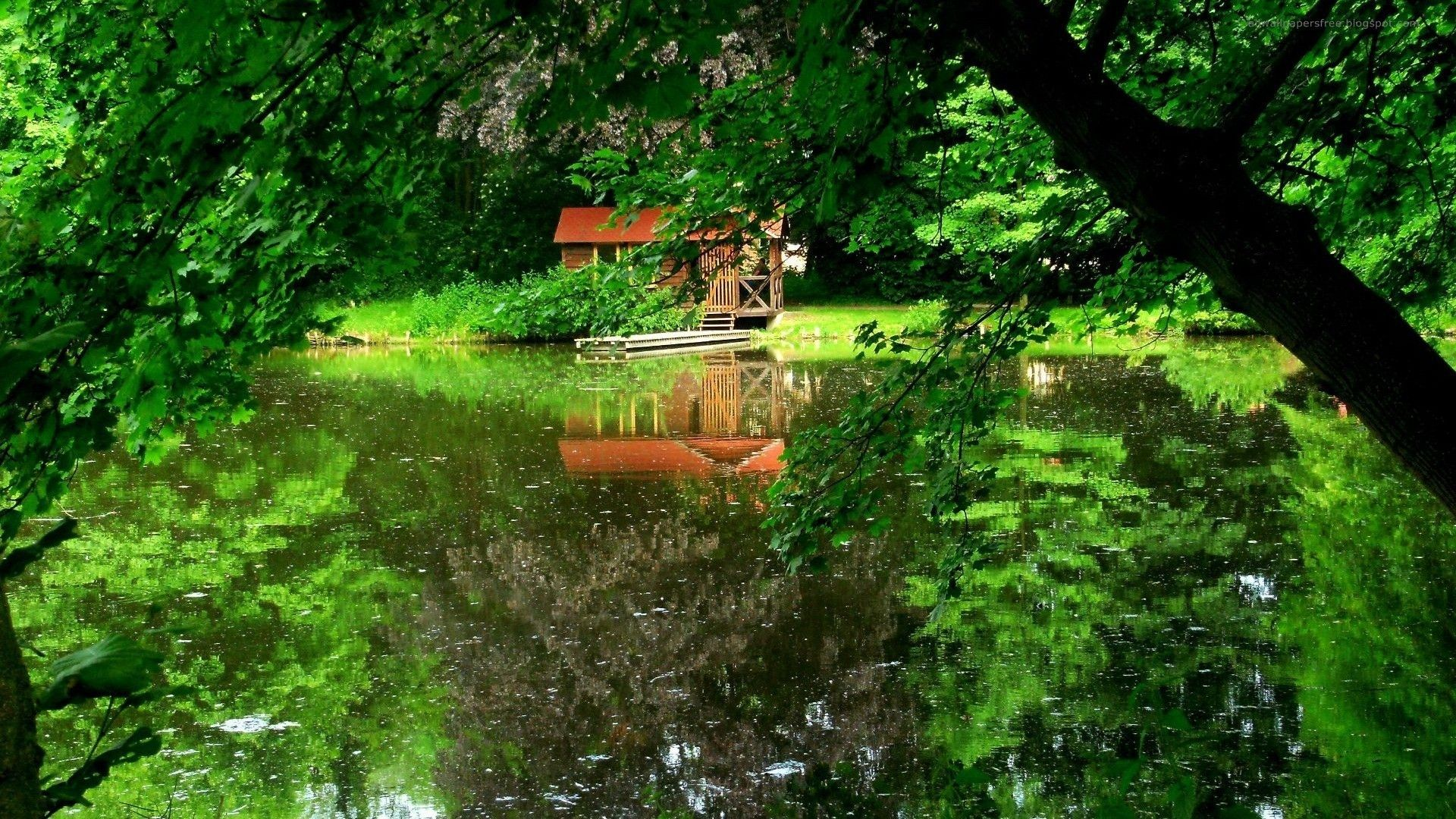 Nature Water Wallpapers Hd Pictures Download Jungle Wallpaper Nature Wallpaper Red House