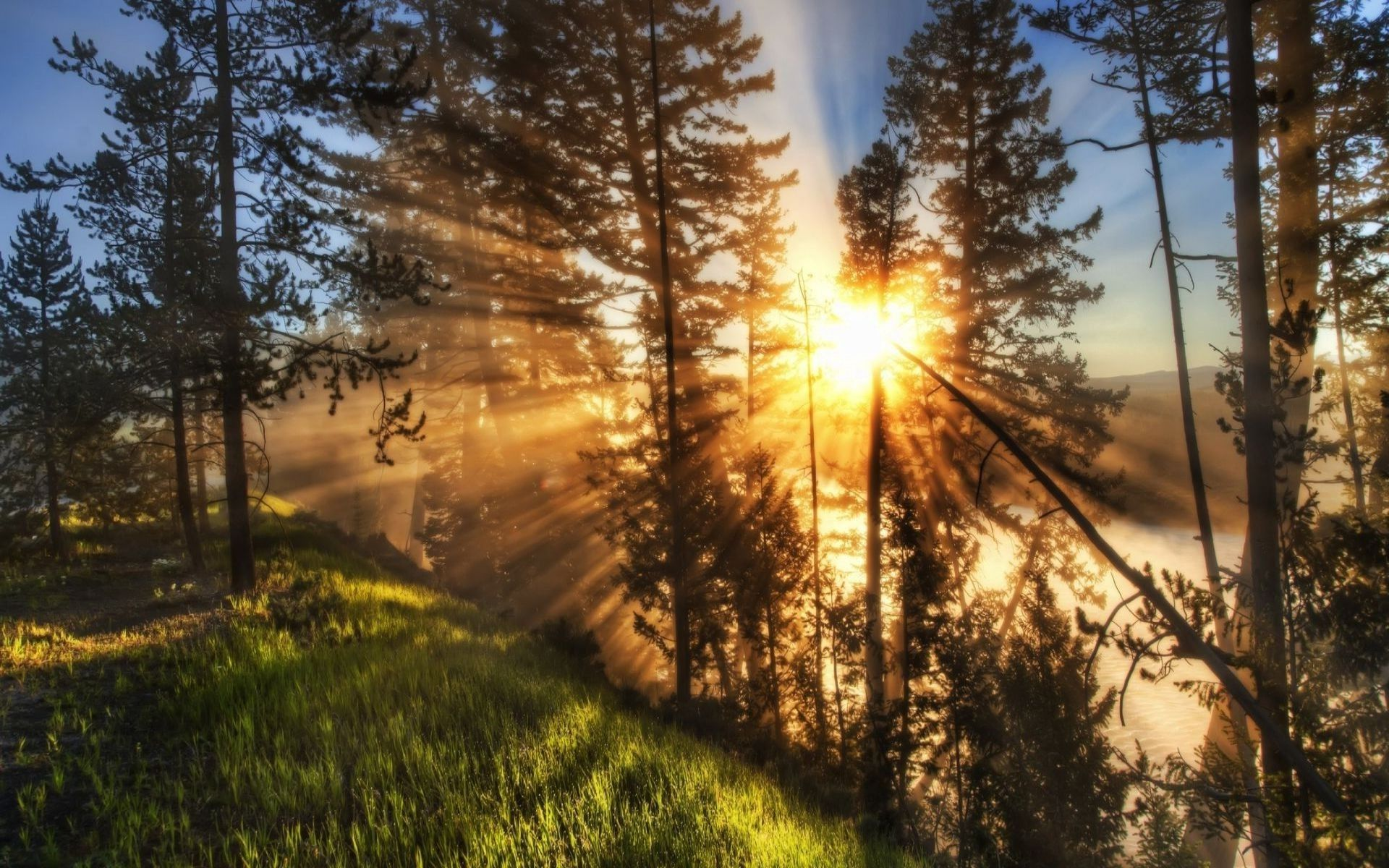 Sun through trees on hill | Nature wallpaper, Beautiful sunset