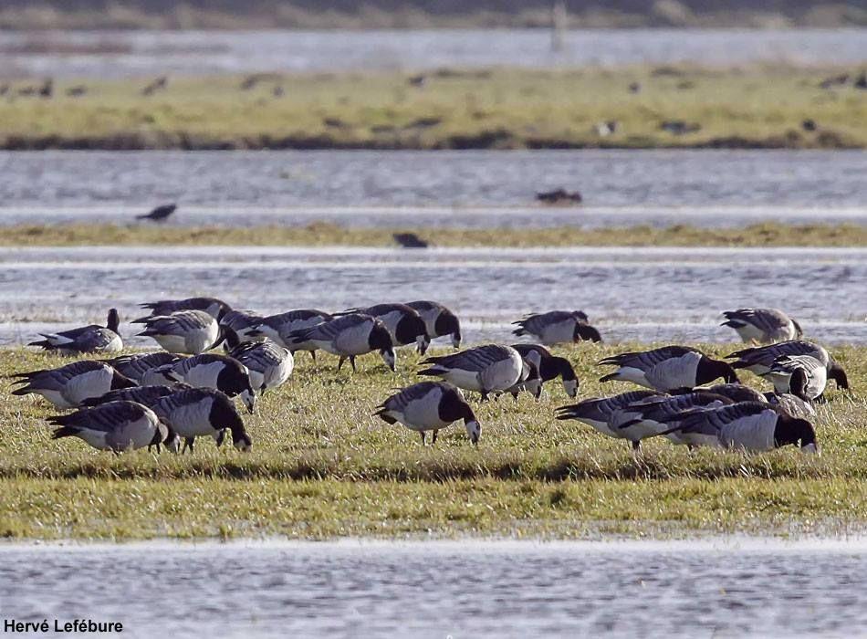 La Baie Des Veys Manche Une Zone Humide Meconnue Avec Images