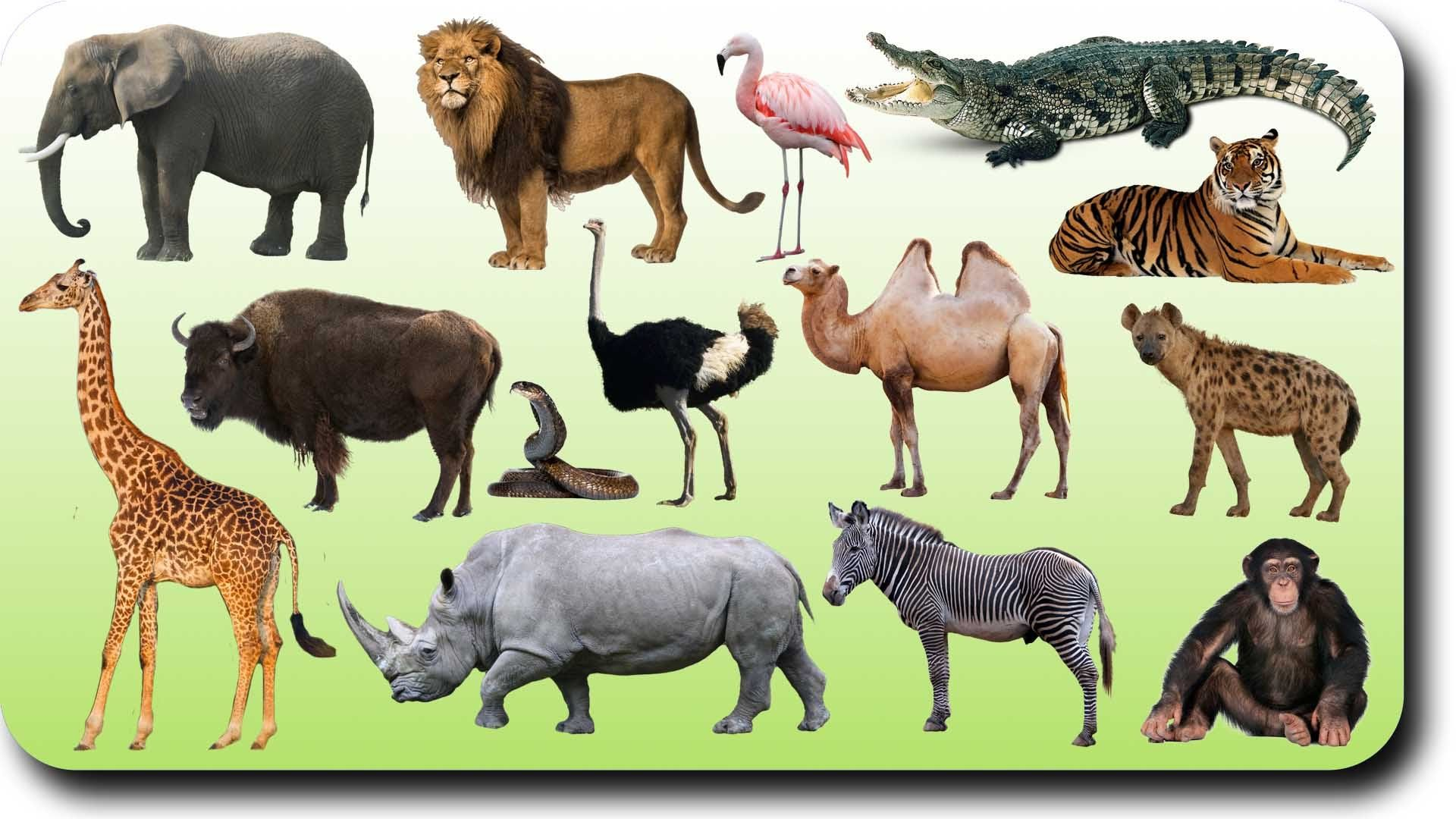 Learning Wild Animals Names and Sounds for kids in English | Funny ...